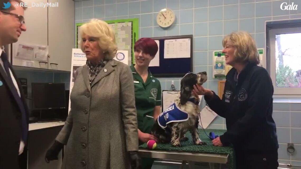 VIDEO- Les chiens très mal dressés de la duchesse Camilla