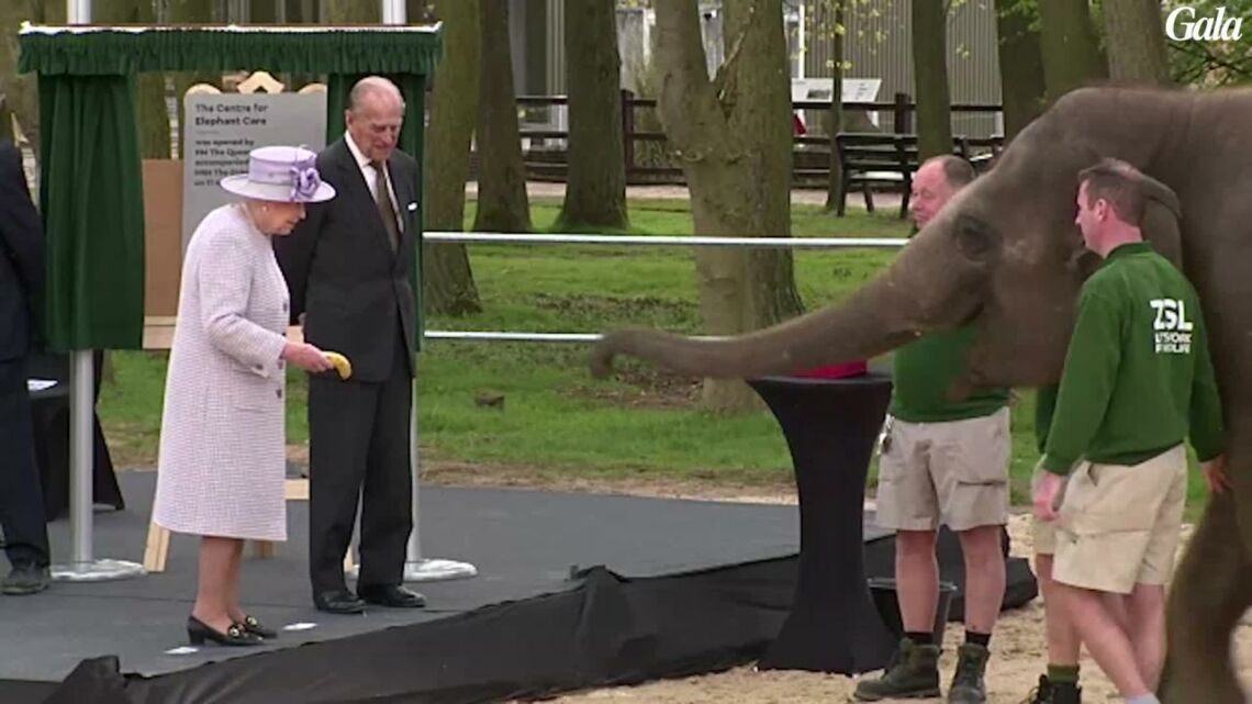 VIDEO – La reine Elizabeth II attaquée par un éléphant
