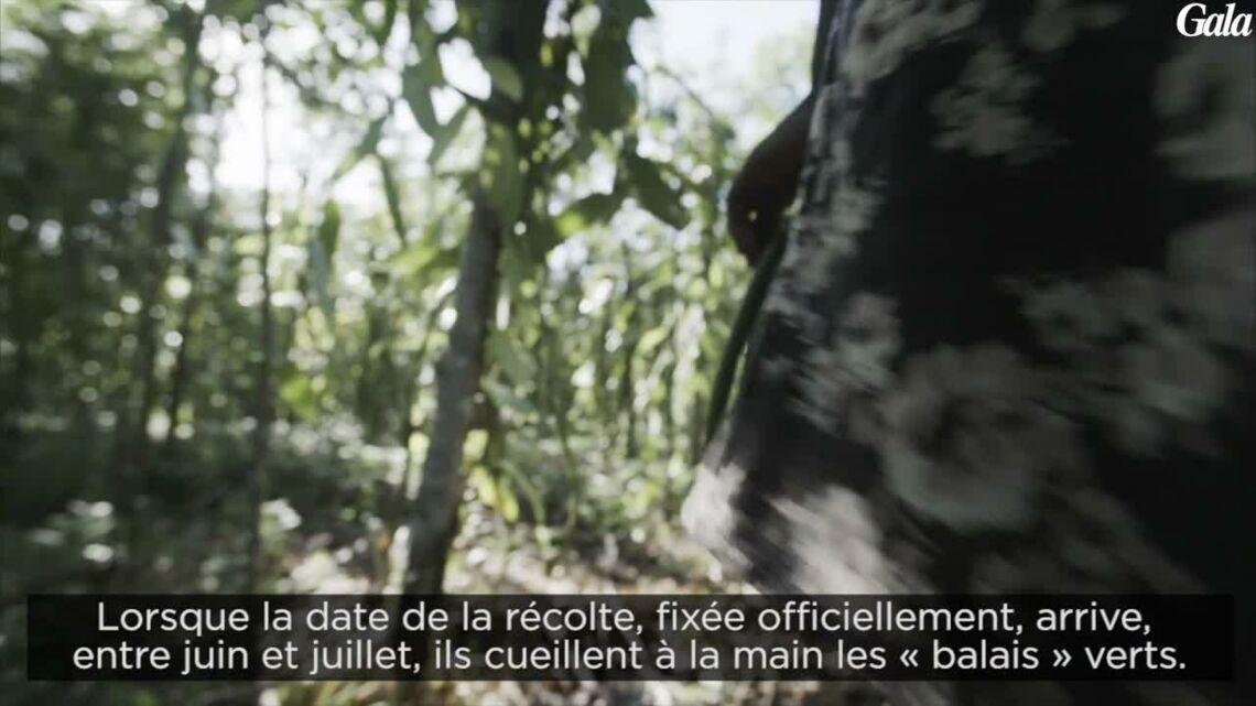 VIDEO – Découvrez les secrets de fabrication d'Aura Mugler, le nouveau parfum de Mugler