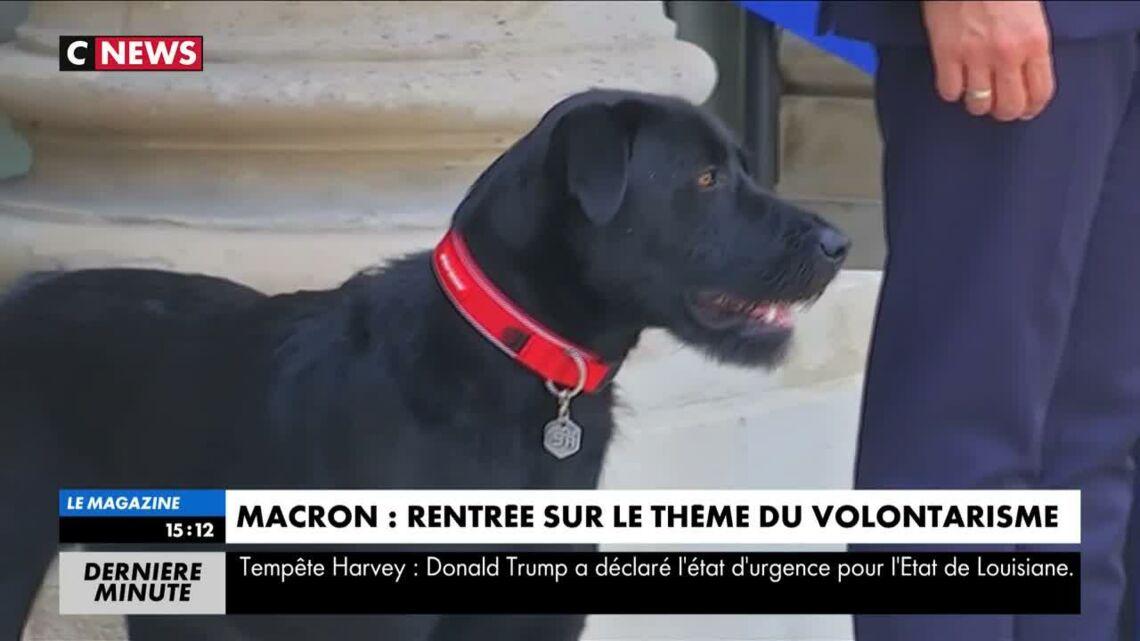 VIDEO – Nemo le chien d'Emmanuel Macron a fait ses premiers pas sur le perron de l'Elysée