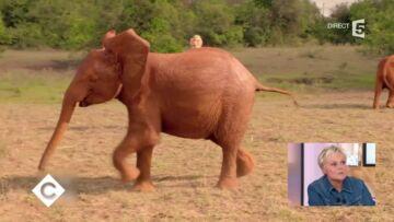 VIDEO – Quand Muriel Robin joue au football avec des éléphanteaux