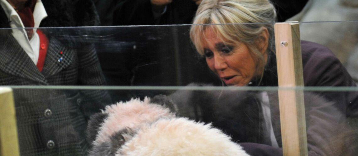 Quand Stéphane Guillon se moque de Brigitte Macron et du bébé panda