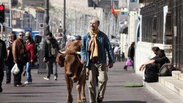 La Vache: la feel-good comédie